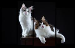 "Модульная картина ""Две кошки"""