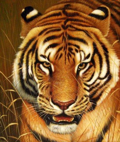 Картина раскраска по номерам 50x65 Тигр вблизи