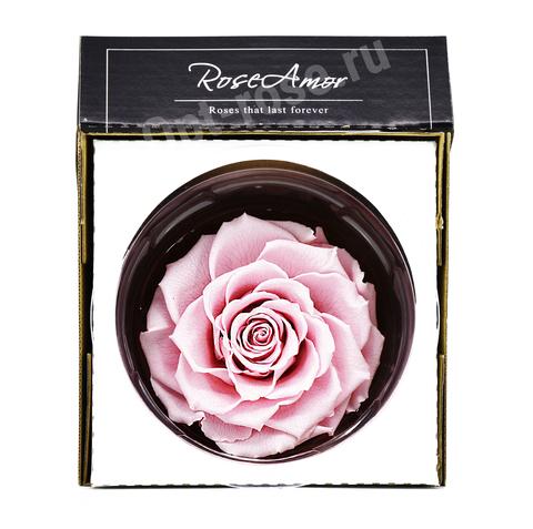 Стабилизированный Бутон Розы Кинг Rose Amor(Эквадор)Bonita Цвет Розовый (10-12см)