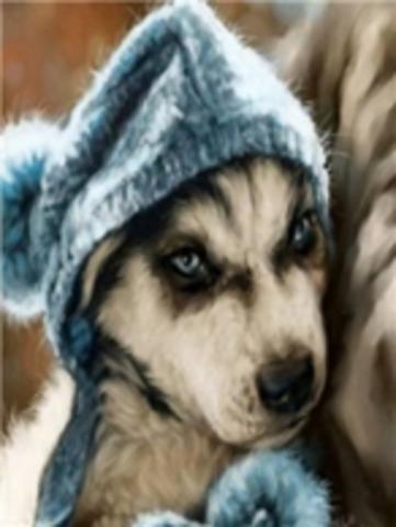 Картина раскраска по номерам 40x50 Щенок в шапке