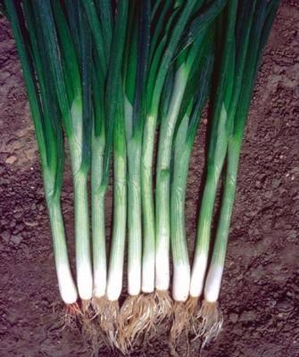 На перо Грин Баннер семена лука на перо (Seminis / Семинис) ГРИН_БАННЕР__Green_Banner_.jpg