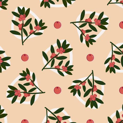 Брусничные веточки. Cranberry twigs