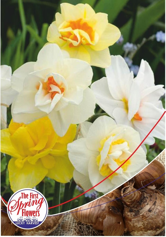 Луковицы Нарцисса махрового  Double Mixed (Дабл Микс) Jan de Wit en Zonen B.V. количество в упаковке 9 луковиц