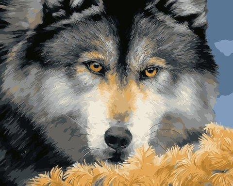 Картина раскраска по номерам 50x65 Беззлобный лев