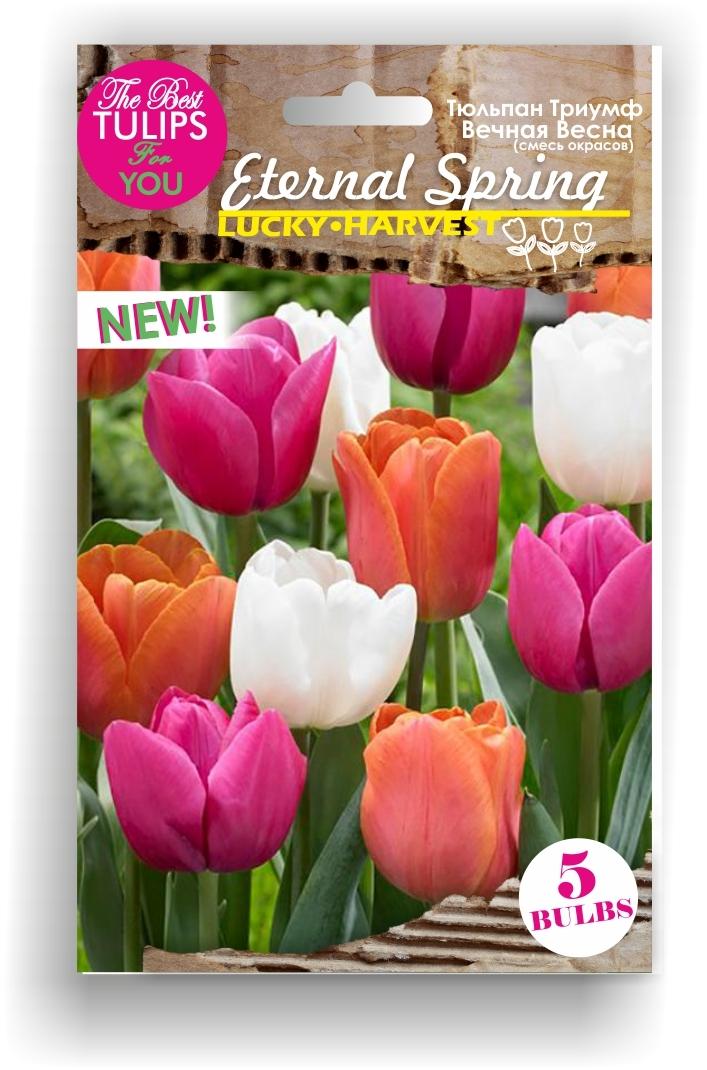 Тюльпан Триумф смесь Eternal Spring (Вечная  Весна) ТМ LUCKY HARVEST 5 шт