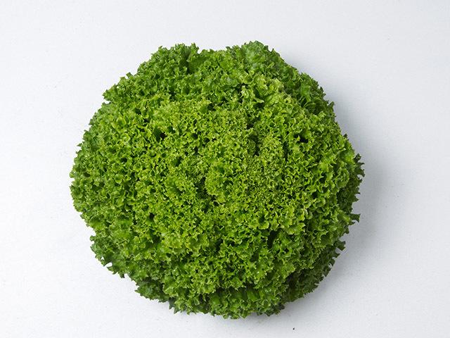 Салат Илема семена салата лолло блонда (Enza Zaden / Энза Заден) Илема.jpeg