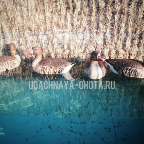 Плавающие чучела белолобых гусей фирмы GHG