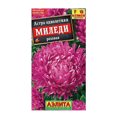 Астра Миледи розовая (Аэлита)