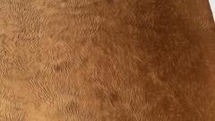 Велюр Чарли 510 коричневый