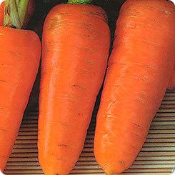 Каталог Шарлотта семена моркови курода/шантане (Гавриш) a8c6a40b_e343_11e8_b169_d485645420e6_565c2aca_eb8f_11e8_aa8b_d485645420e6.jpeg