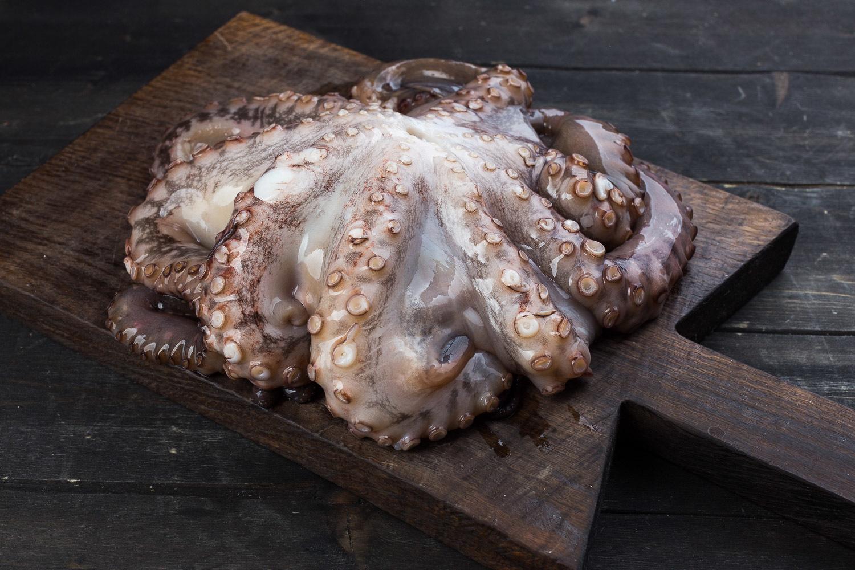 Крупный осьминог