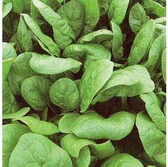 Аполло семена шпината (Sakata / Саката)