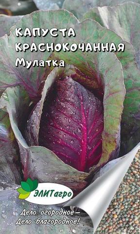 Семена Капуста краснокочанная Мулатка