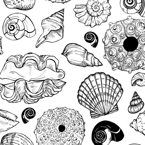 ракушки и морские ежи