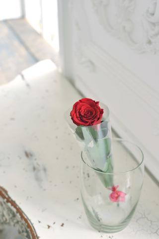 Роза на стебле Premium Оптом Высота*Бутон (37см*5-6см) Цвет бордовый