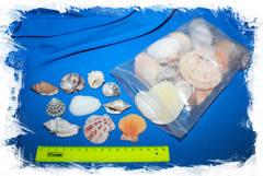 Набор морских ракушек для декора