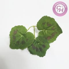 Плющ, лист округлый, 3 листика 6-8 см.