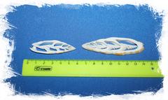 Морские ракушки для бижутерии и украшений