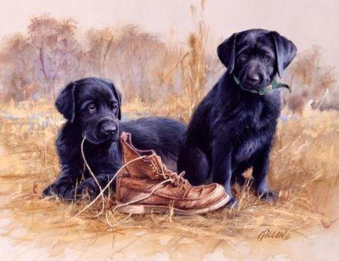 Картина раскраска по номерам 50x65 Щенята и ботинок