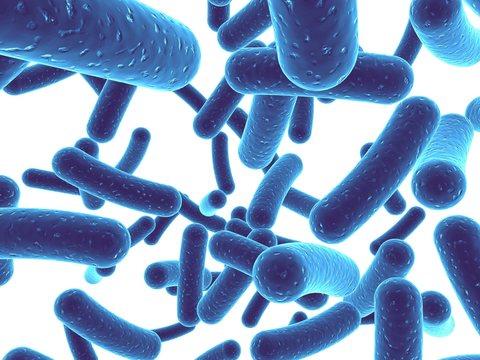 Фильтрат ферментированных лактобактерий Salix Alba (кора белой ивы), 5гр - 1300тг