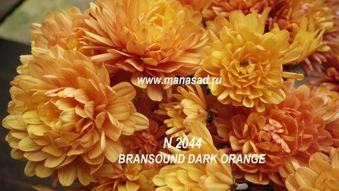 Хризантема мультифлора Bransound Dark Orange N 2044