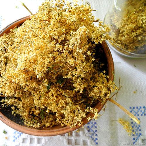 Травы Бузина чёрная, цвет sambucus-blossom-1.jpg