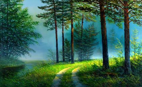Картина раскраска по номерам 50x65 Дорога в туманном лесу