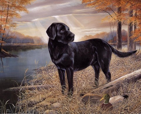 Картина раскраска по номерам 50x65 Черный лабрадор