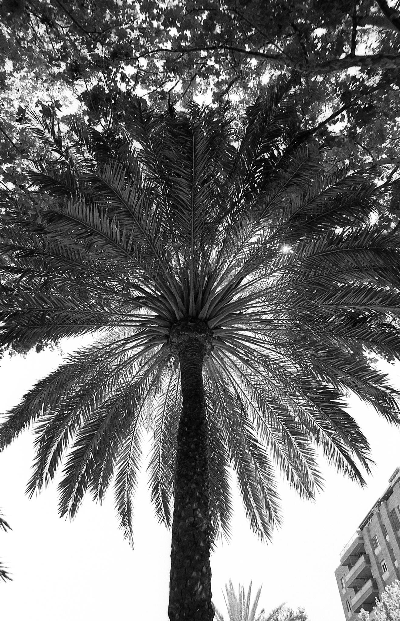 Фотопленка Silberra ULTIMA 100, 35 мм, 36 кадров, ч/б