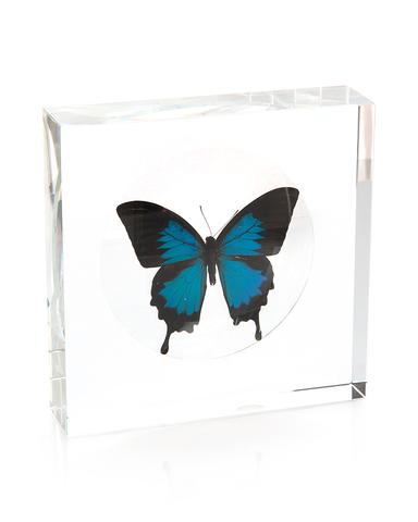 Iridescent Blue Swallowtail