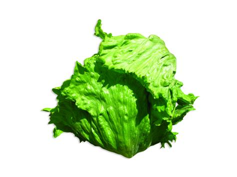 Салат Ярдена семена салата айсберг (Hazera / Хазера) Ярдена1.jpg