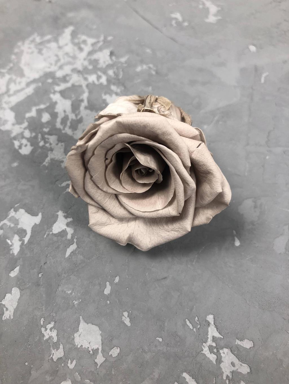 Роза классическая мокко d=3,5-4 см
