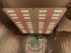 80х80х160 PROBOX  120W LED Quantum FR + IR + UгV