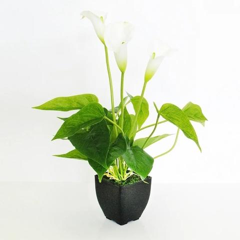 Цветок иск.Каллы в кашпо белый 42см