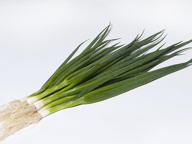 На перо Эстафет F1 семена лука на перо (Takii / Таки) estafette.jpeg