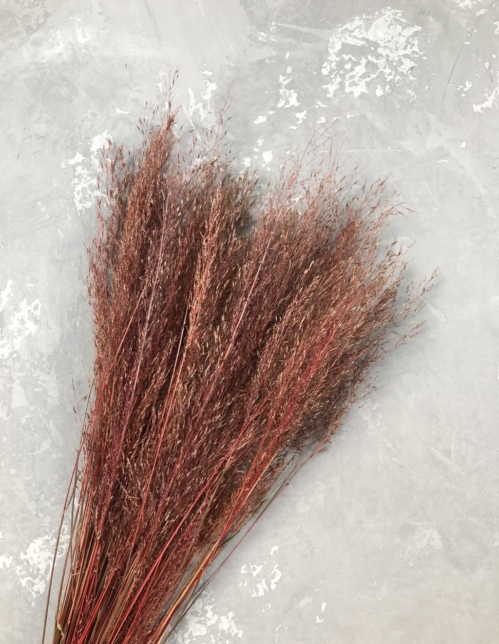 Сухоцвет бордовый