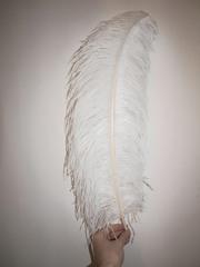 Перья страуса  декоративные  ПРЕМИУМ 60-65 см. (цена за 1 шт.) , (выберите цвет)