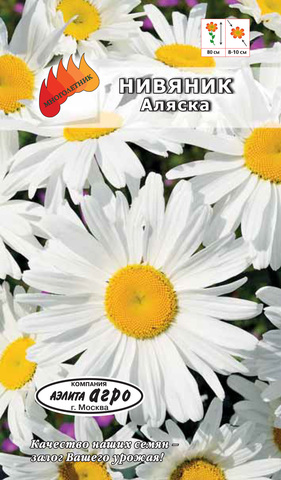 Семена Нивяник Аляска. Мнг