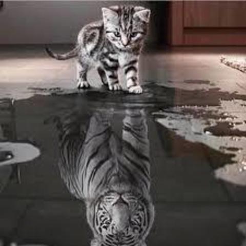 Алмазная Мозаика 30x40 Большое отражение маленького котенка