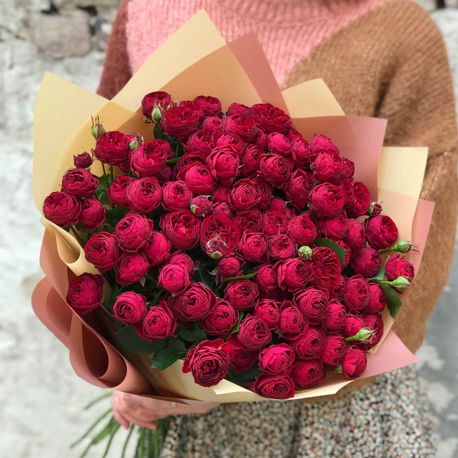 Троянда Maroon