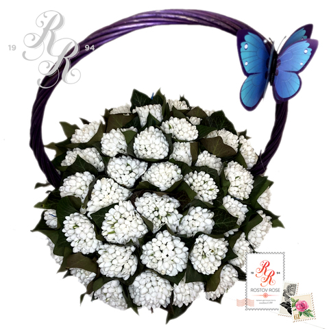 Популярные сезонные цветы