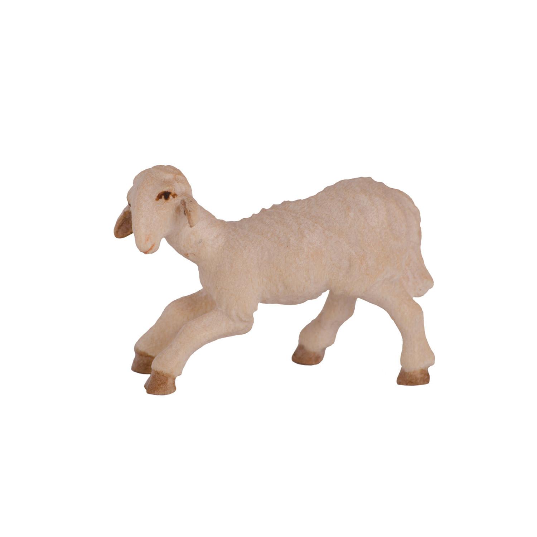 Овца у водопоя