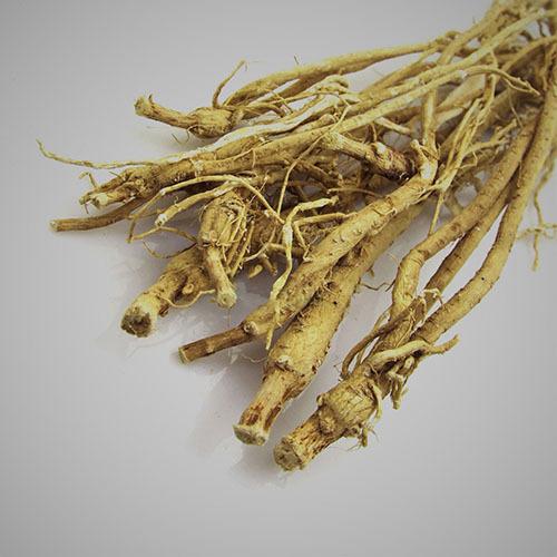 Травы Астрагал, корень astragalus-root-23.jpg