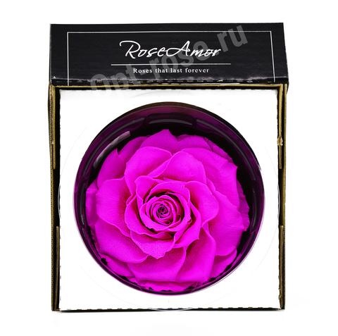 Стабилизированный Бутон Розы Кинг Rose Amor(Эквадор)Bonita Цвет Ярко розовая (10-12см)