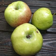 Яблоки сорт Мартовское (1 кг)