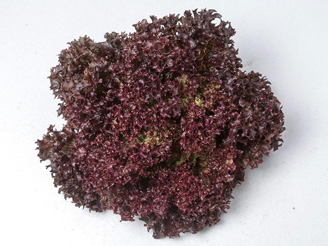 Салат Леа семена салата лолло росса (Enza Zaden / Энза Заден) Леа.jpeg