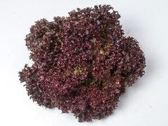 Леа семена салата лолло росса (Enza Zaden / Энза Заден)