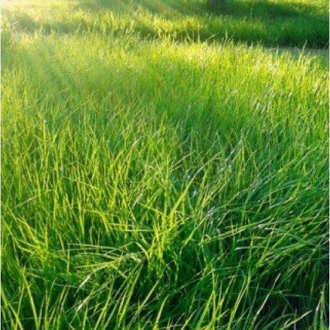 Смесь семян для газона Солнечная 500 г