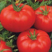Гавриш Ля-ля-фа F1 семена томата детерминантного (Гавриш) Ля-ля-фа_семена_овощей_оптом.jpeg