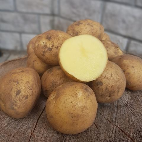 Картофель сорт Метеор БИО (Васильки), кг